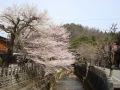 4.21江名子川沿い