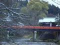 2011.12.09雪の中橋 (縮1).JPG