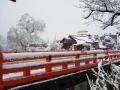 2012.04.04雪景色 (4).jpg