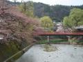 中橋の桜 008.JPG