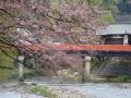中橋の桜 011.JPG