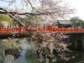 中橋の櫻 017.JPG