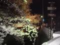 中橋の櫻 028.JPG