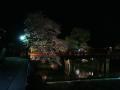 中橋のライトアップ 009.JPG