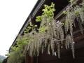 春の風景 087.JPG