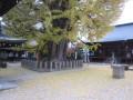 IMG_3675.JPG